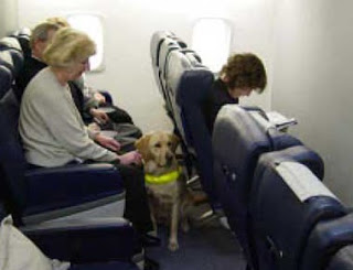 Alaska Airlines Introduces New Rules For Emotional Support